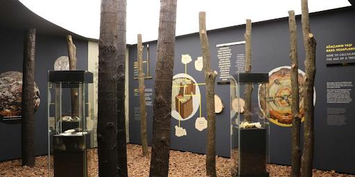 Söğüt Müzesi