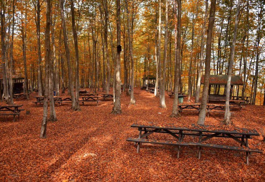 Asarkaya Kent Ormanı