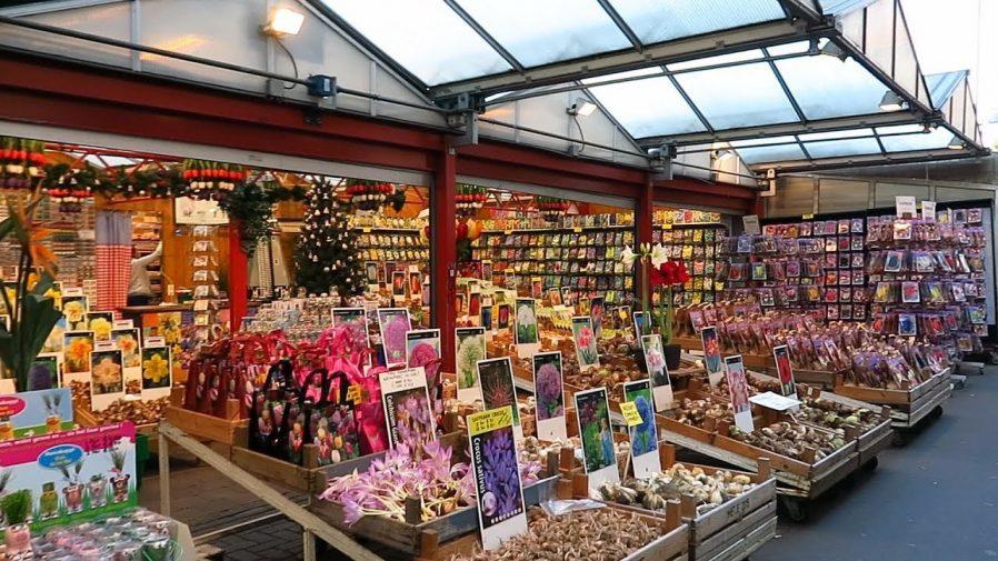 Bloemenmarkt (Amsterdam Çiçek Pazarı)