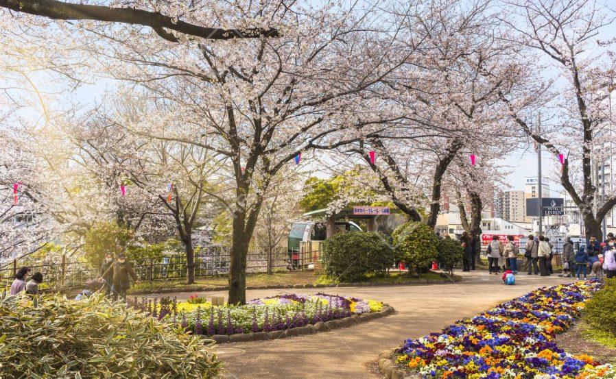 Asukayama Parkı'nda Monoraile Binin