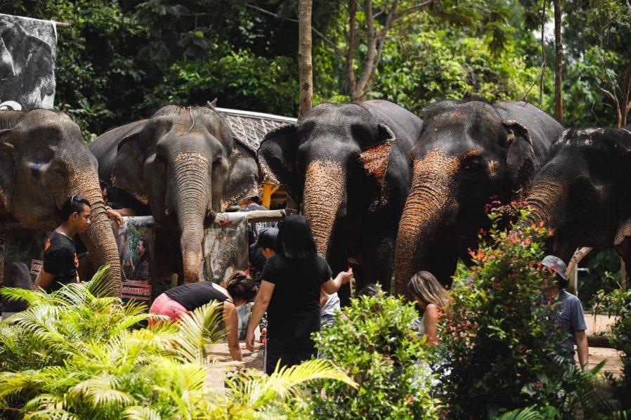 Phuket Fil Korunağı (Elephant Sanctuary)