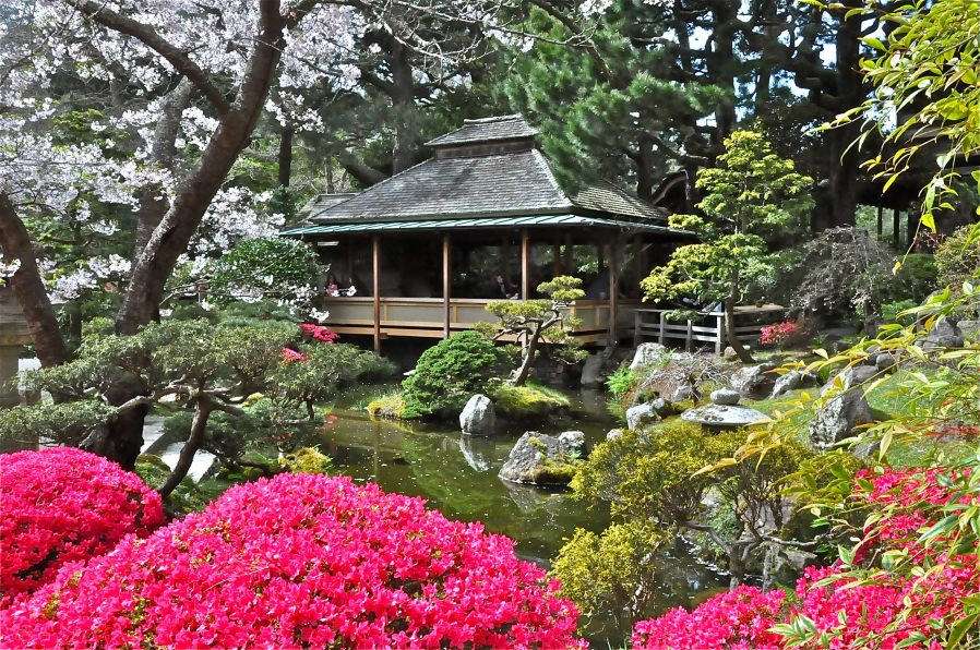 Golden Gate Park & Japanese Tea Garden