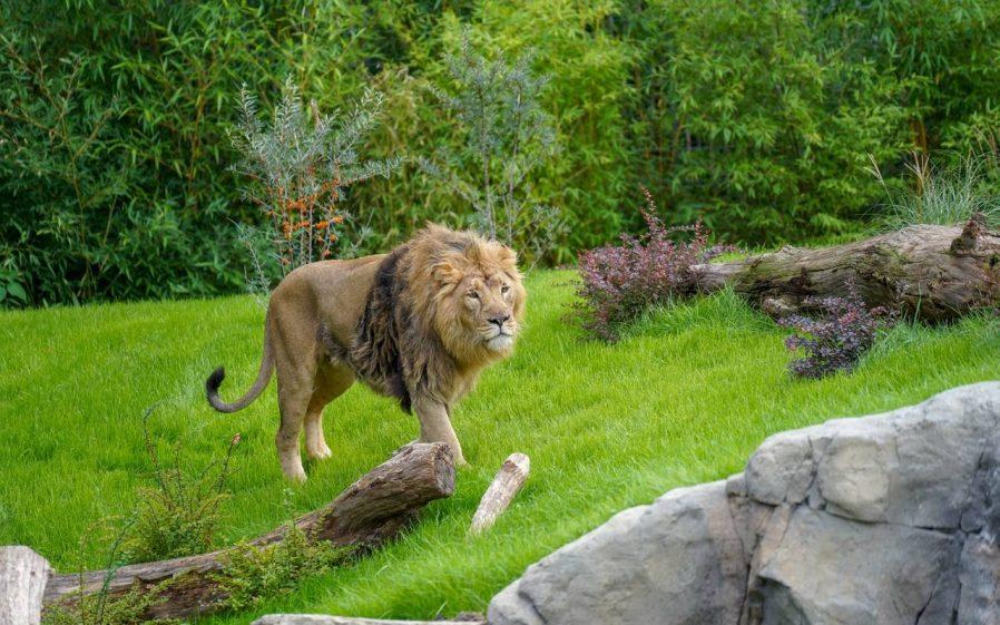 Kölner Zoo (Köln Hayvanat Bahçesi)
