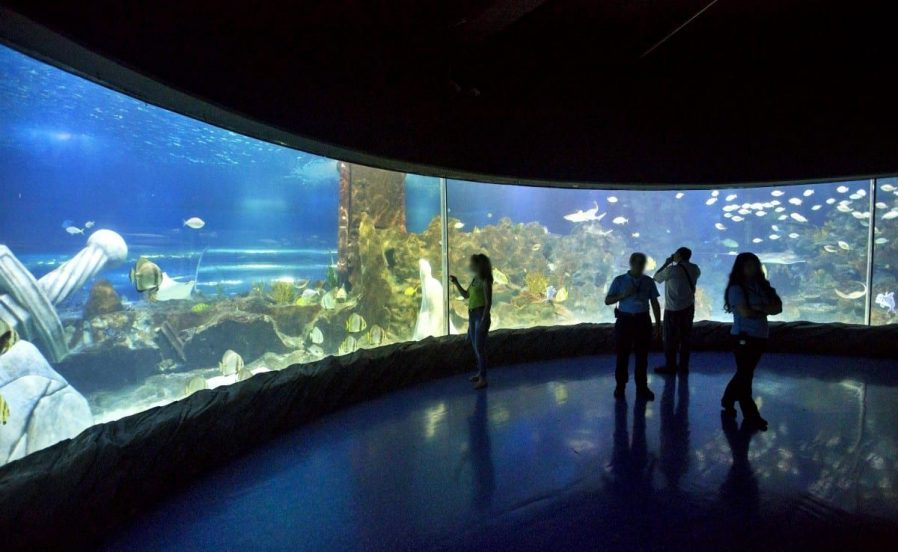 SEA LIFE Sydney Akvaryumu