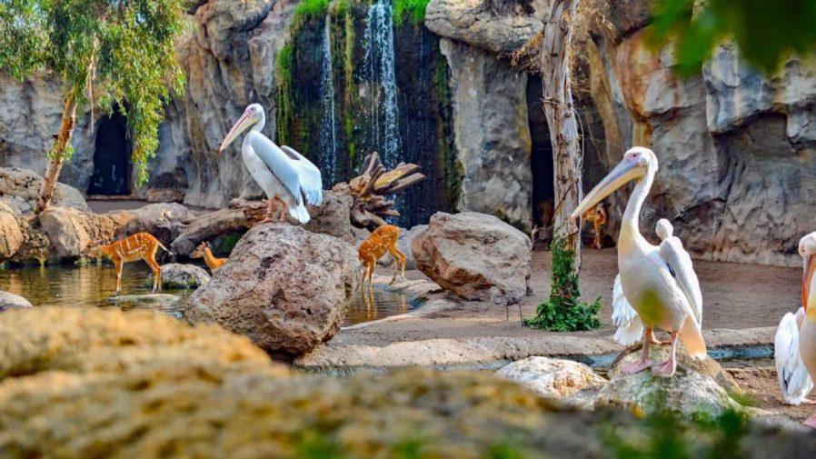 Dünyanın En Eski Hayvanat Bahçesini Görün