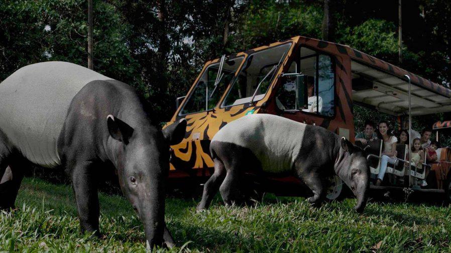 Gece Safarisi Yapın