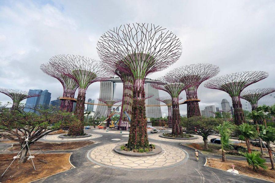 Singapur Botanik ve Orkide Bahçesi