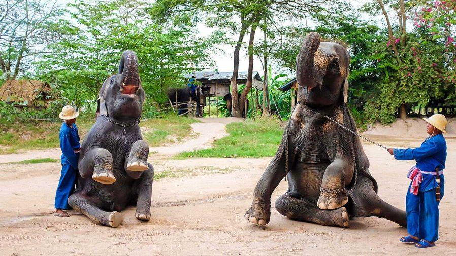 Pattaya Elephant Village (Pattaya Fil Çiftliği)