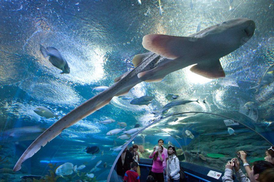 Underwater World (Su Altı Dünyası)